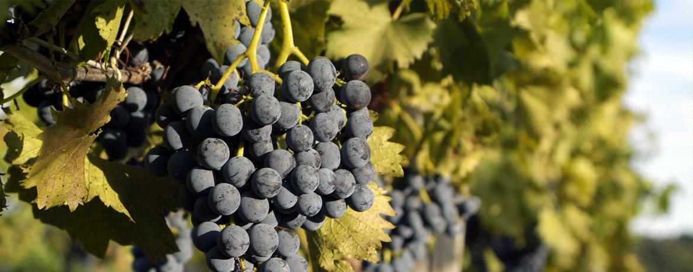 top-madera-wines